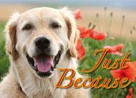 donation card_justbecause_anytime